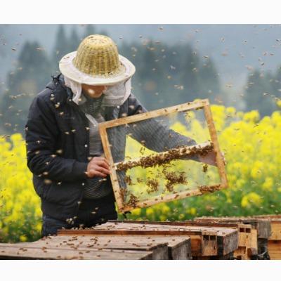 养蜂技术大全 意蜂中蜂 蜜蜂养殖病害防病虫害防治18光盘1书籍